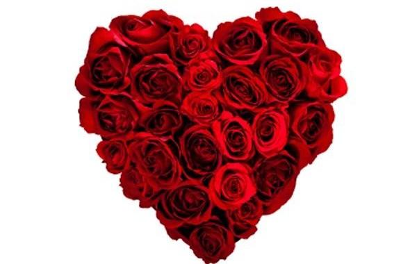 heart-roses1_0